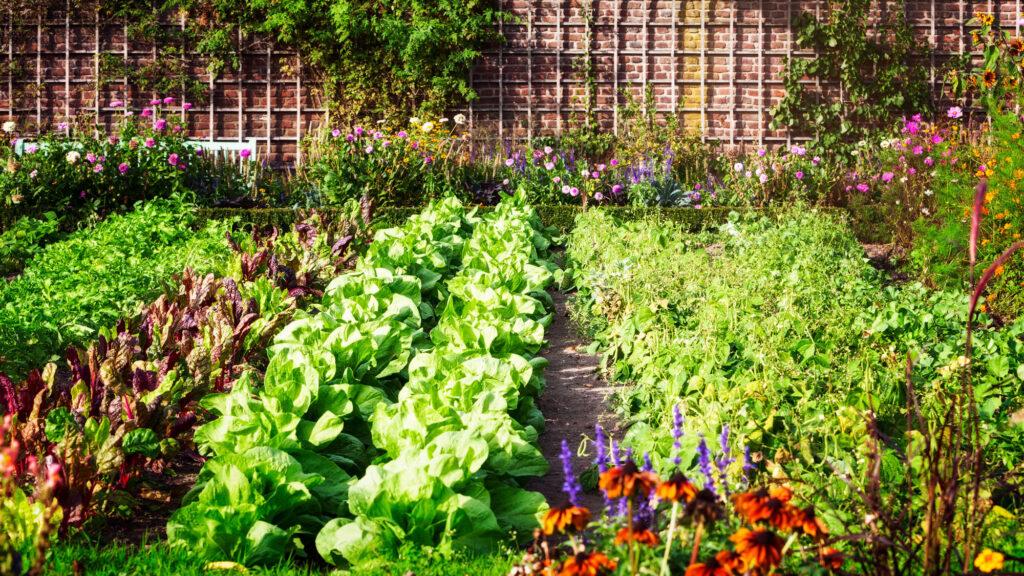 Der genussvolle Gemüsebauer